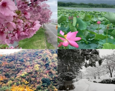 Running Through the Seasons in Niigata