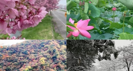 Running Through the Seasons in Niigata